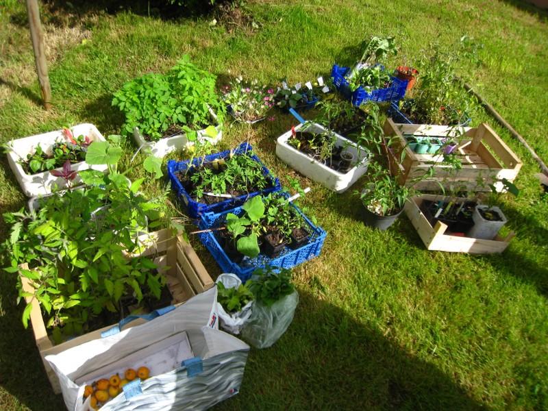 Les plantes à partager